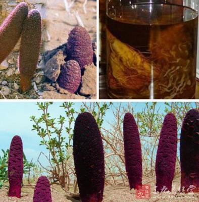 锁阳泡酒配方_锁阳枸杞泡酒配方比例_锁阳泡水喝的正确方法